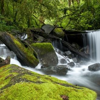 Panama Nature_